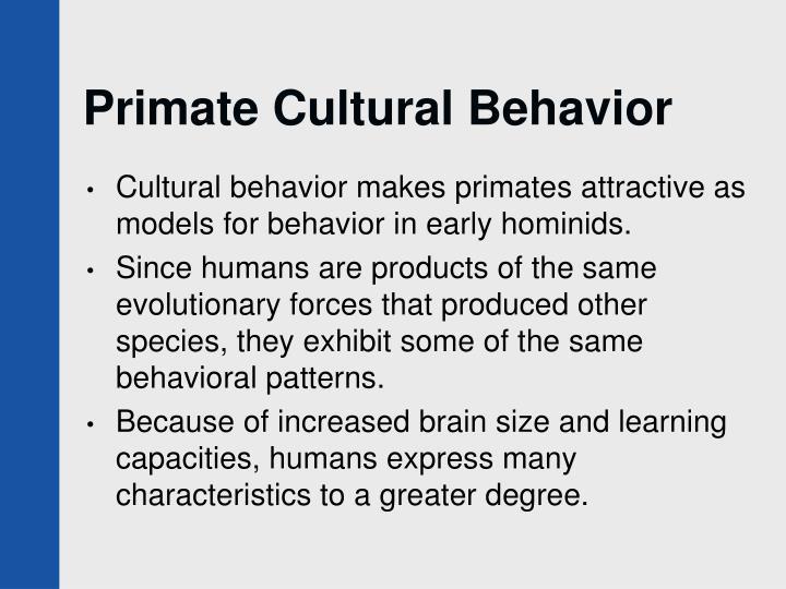 Primate Cultural Behavior