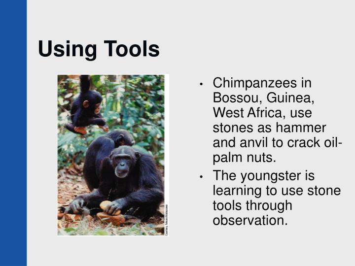 Using Tools