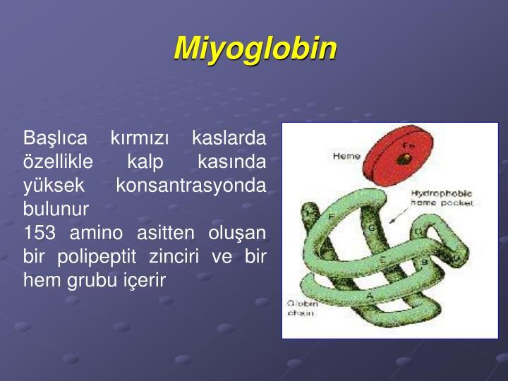 Miyoglobin