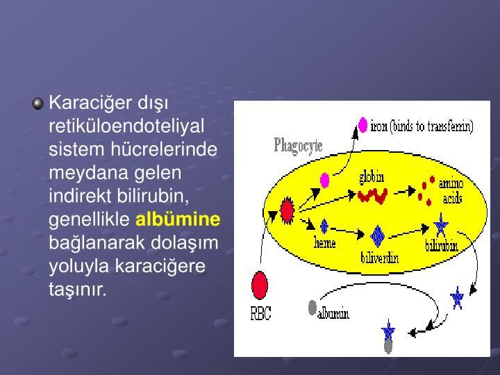 Karaciğer dışı retiküloendoteliyal sistem hücrelerinde meydana gelen indirekt bilirubin, genellikle