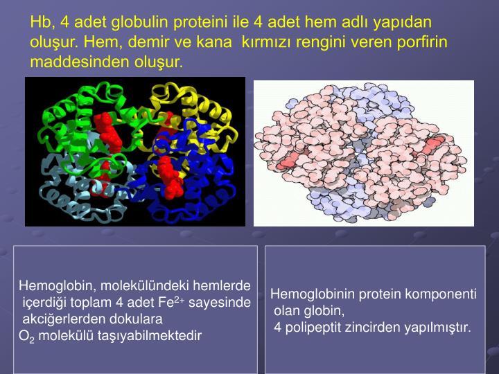 Hb, 4 adet globulin proteini ile 4 adet hem adlı yapıdan oluşur. Hem, demir ve kana  kırmızı rengini veren porfirin maddesinden oluşur.