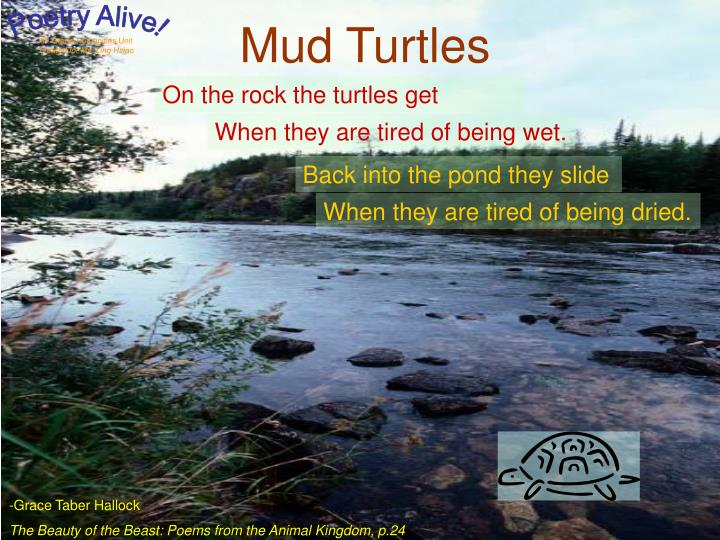 Mud Turtles
