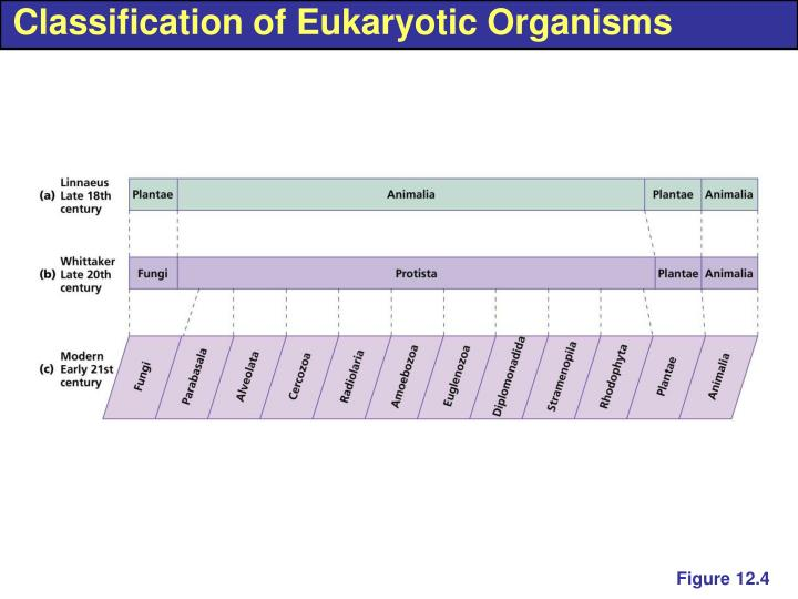 Classification of Eukaryotic Organisms