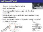 nutrition of fungi