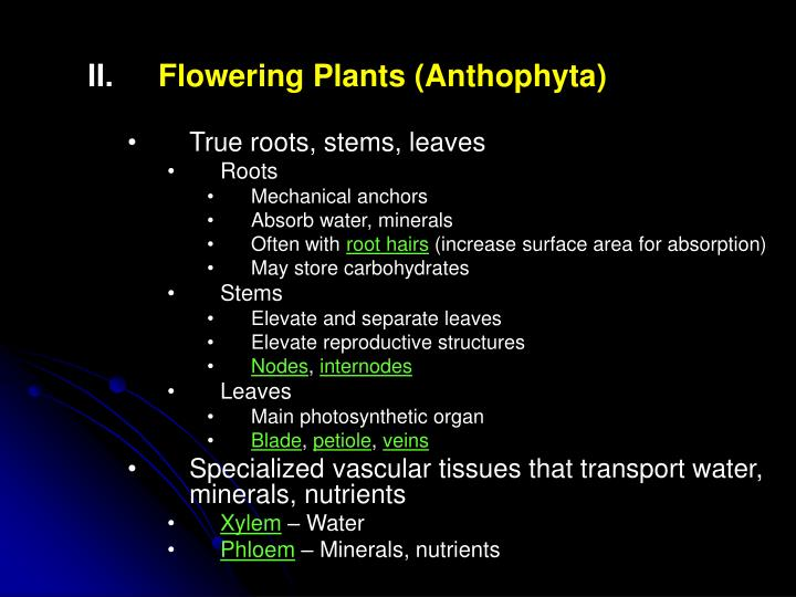 Flowering Plants (Anthophyta)