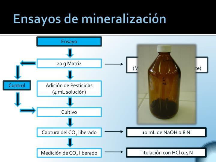 Ensayos de mineralización