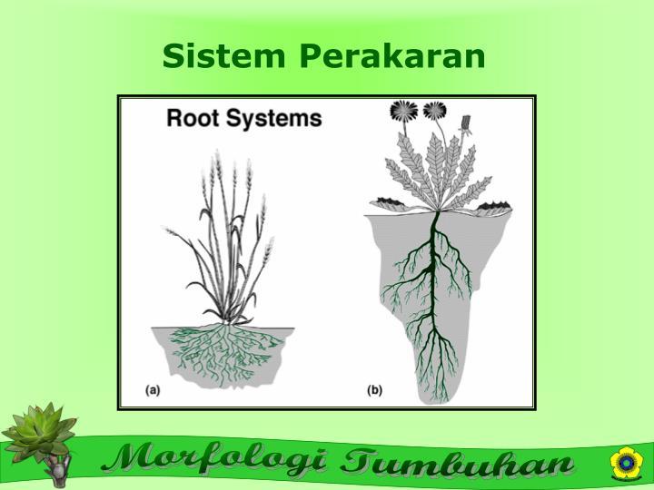 Sistem Perakaran