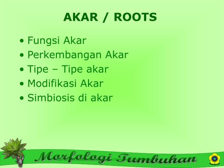 AKAR / ROOTS