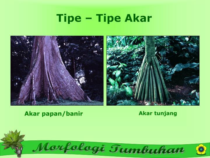 Tipe – Tipe Akar