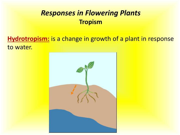 Responses in Flowering Plants