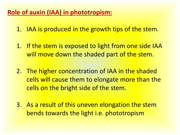 Role of auxin (IAA) in phototropism