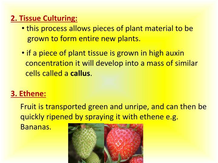 2. Tissue Culturing:
