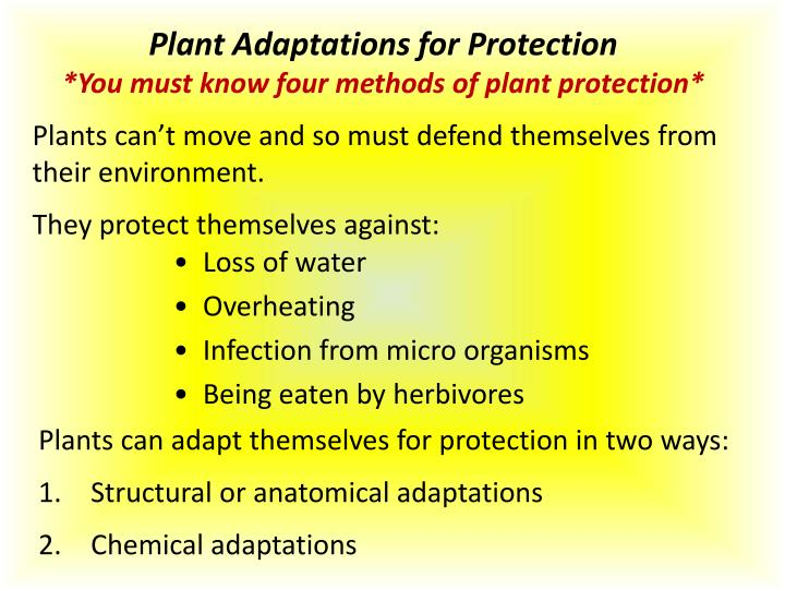 Plant Adaptations for Protection
