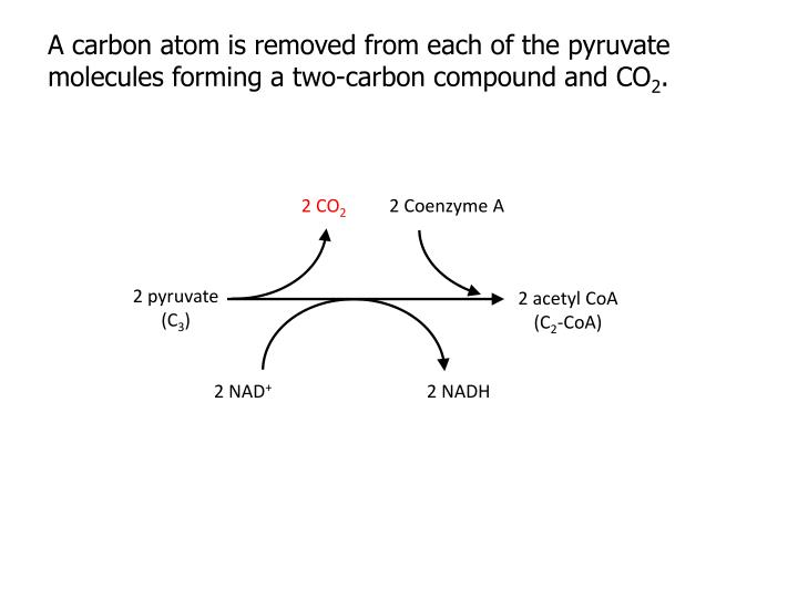 A carbon atom is removed from each of the pyruvate molecules forming a two-carbon compound and CO
