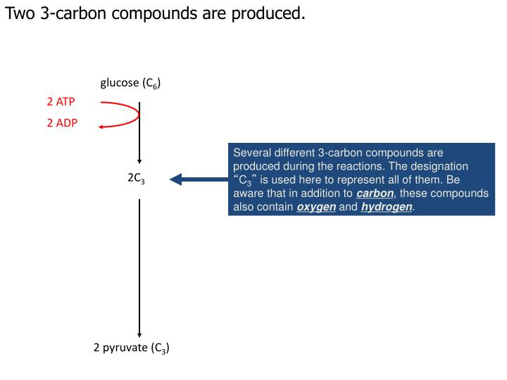 Two 3-carbon compounds are produced.