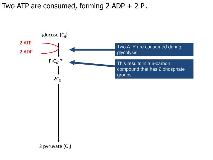 Two ATP are consumed, forming 2 ADP + 2 P