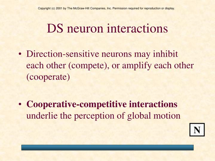 DS neuron interactions