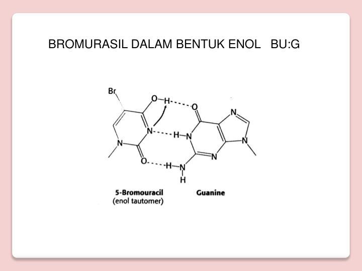 BROMURASIL DALAM BENTUK ENOL   BU:G
