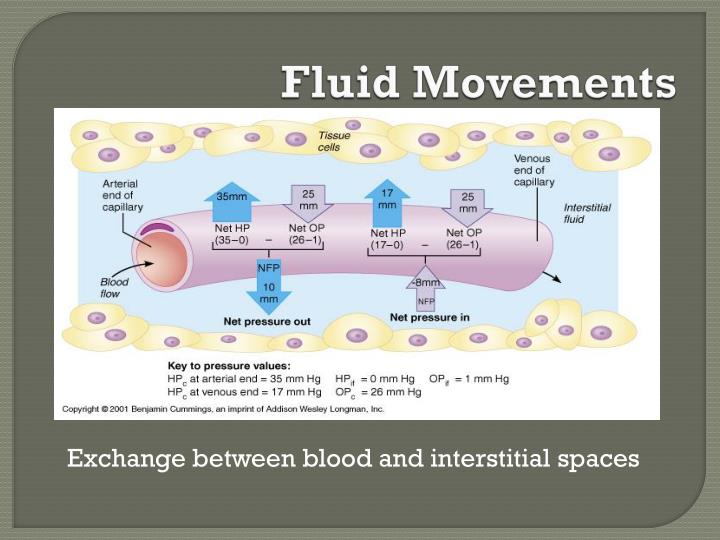 Fluid Movements