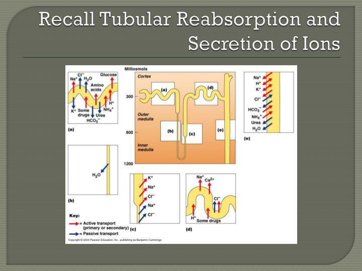 Recall Tubular Reabsorption and Secretion of Ions