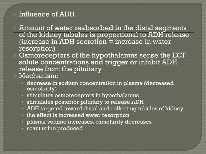 Influence of ADH