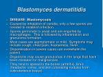 blastomyces dermatitidis