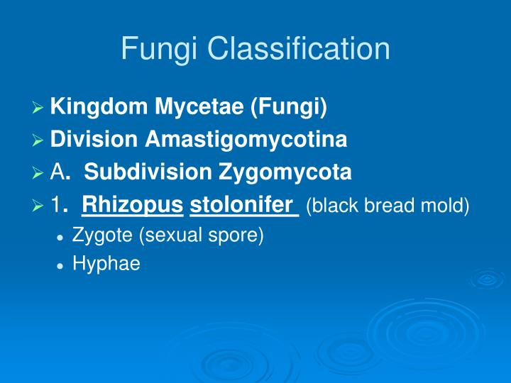 Fungi Classification