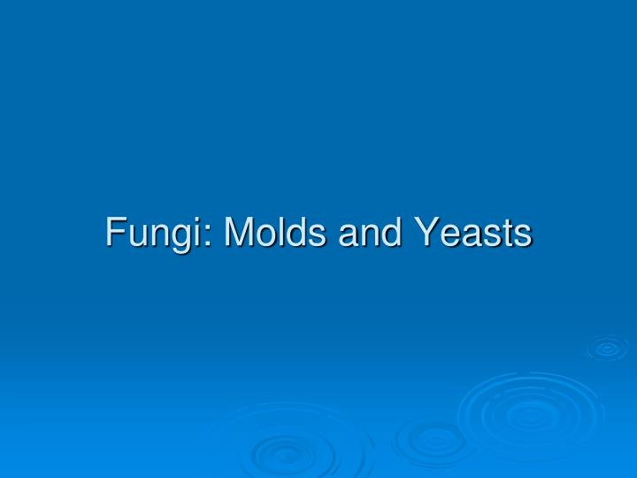 Fungi molds and yeasts