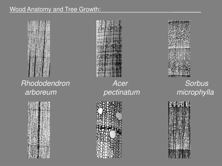Wood Anatomy and Tree Growth:                                           ________