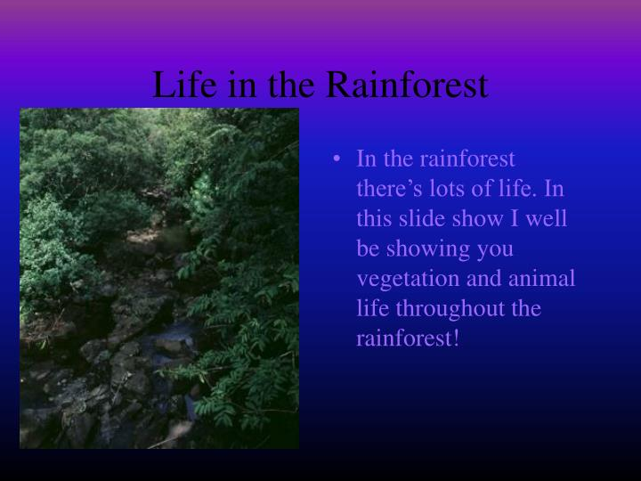 Life in the rainforest