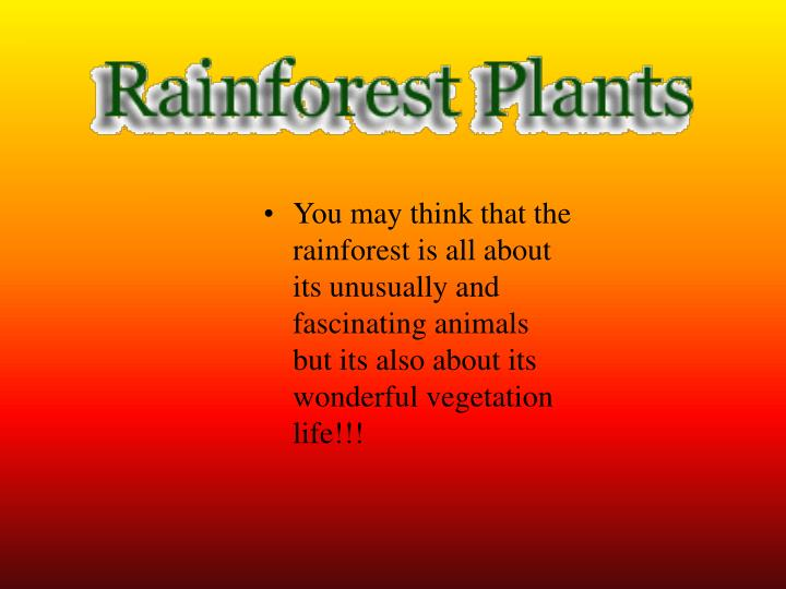 You may think that the rainforest is all about its unusually and fascinating animals but its also about its wonderful vegetation life!!!