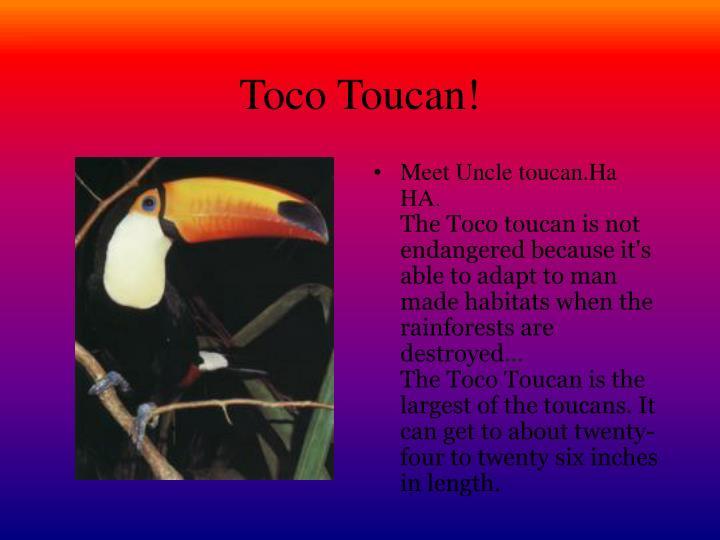 Toco Toucan!