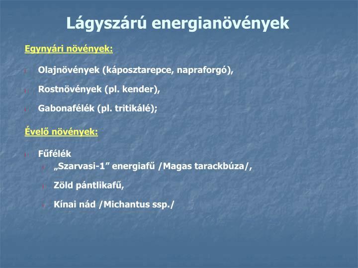 Lágyszárú energianövények
