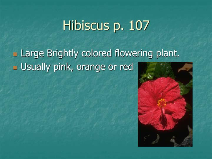 Hibiscus p. 107