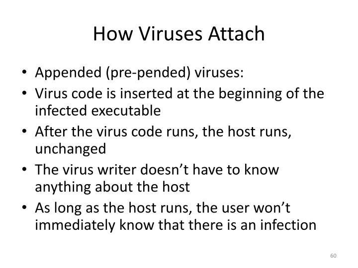 How Viruses Attach