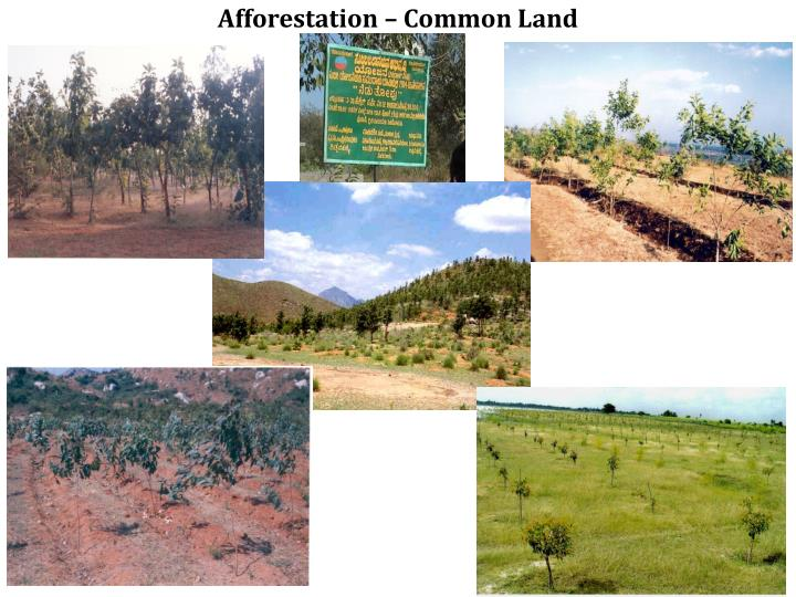 Afforestation – Common Land