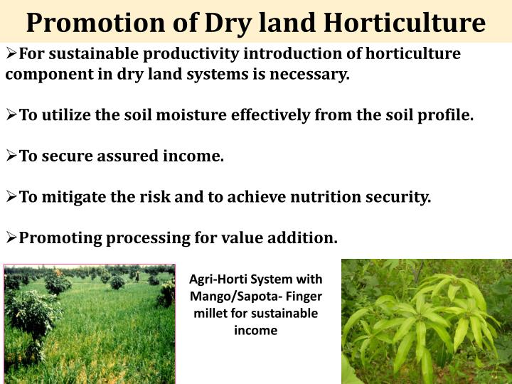 Promotion of Dry land Horticulture
