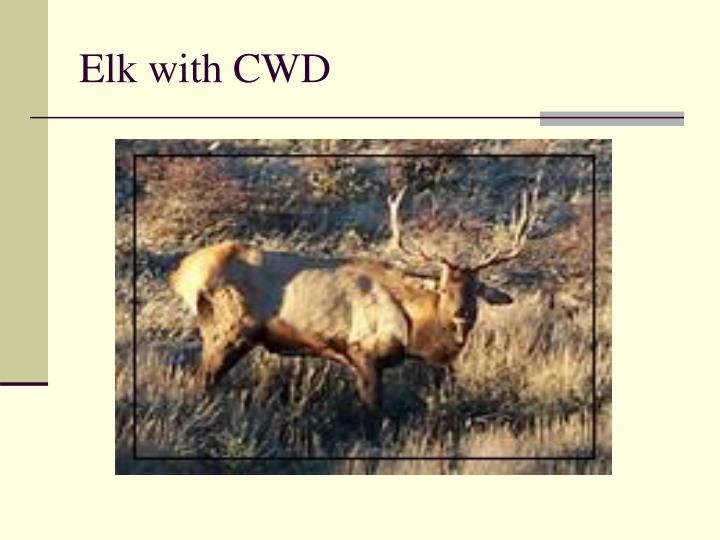 Elk with CWD