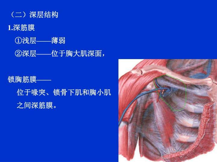 (二)深层结构