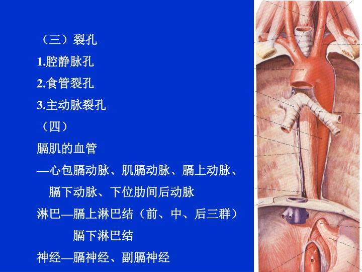 (三)裂孔