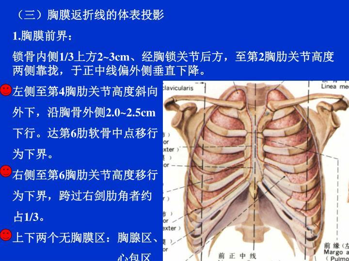 (三)胸膜返折线的体表投影
