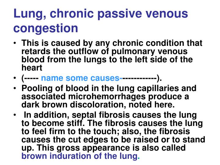 Lung, chronic passive venous congestion