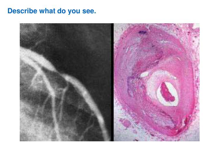 Describe what do you see.