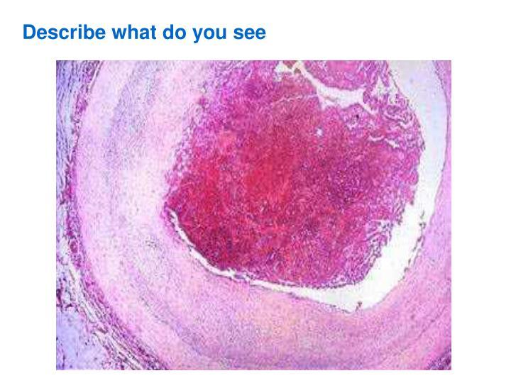Describe what do you see