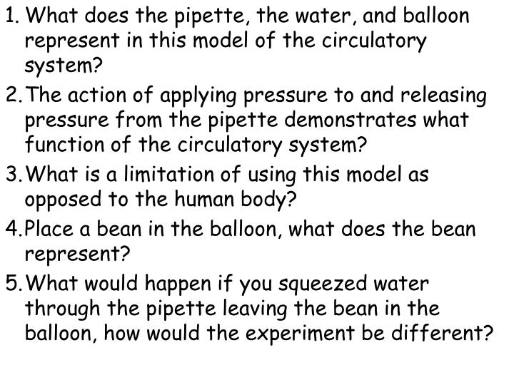 What does the pipette, the water, and balloon represent in this model of the circulatory system?