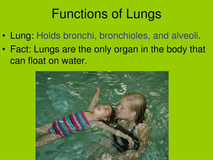 Functions of Lungs