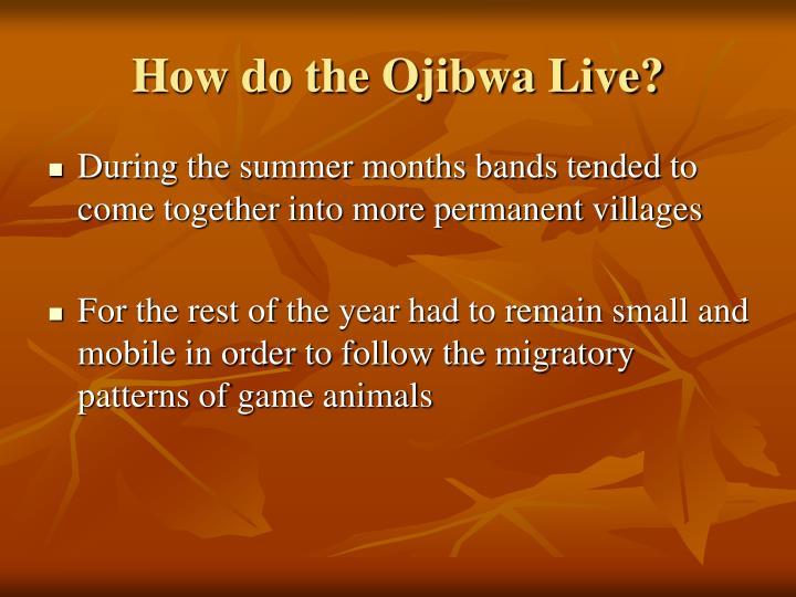 How do the Ojibwa Live?