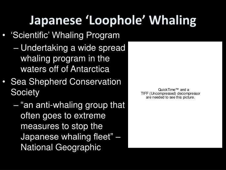 Japanese 'Loophole' Whaling