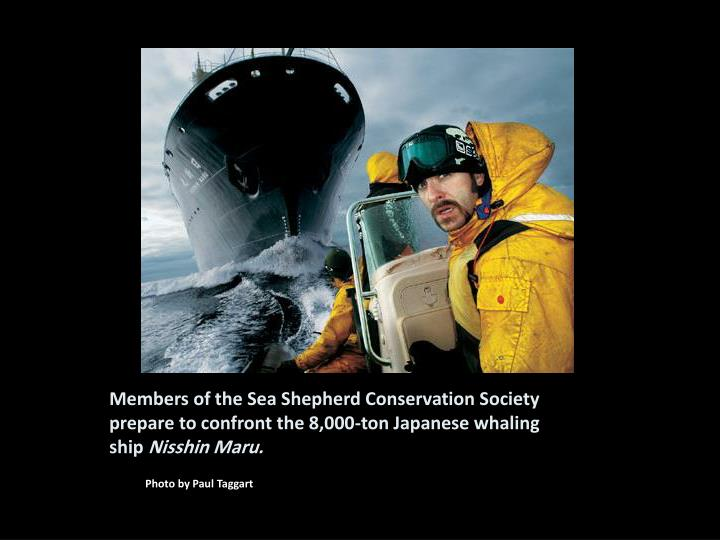 Members of the Sea Shepherd Conservation Society prepare to confront the 8,000-ton Japanese whaling ship