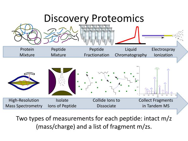 Discovery Proteomics